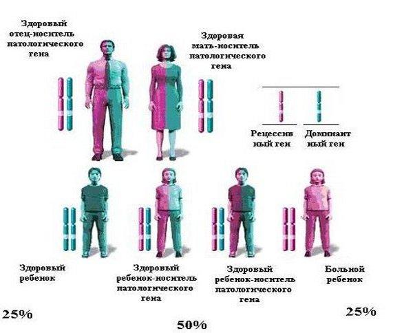 схема распространения мутирующего гена