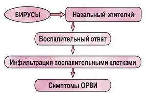 блок-схема развития вирусов