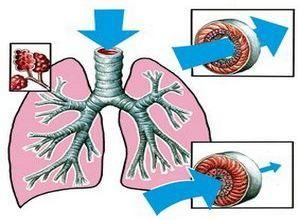 схема развития процесса астмы