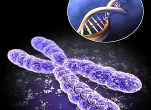 ген и днк