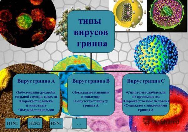 таблица типов вирусов гриппа