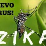 Характерные симптомы вируса Зика