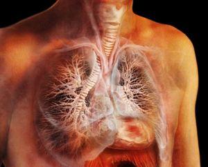 изображение лёгких в 3д формате