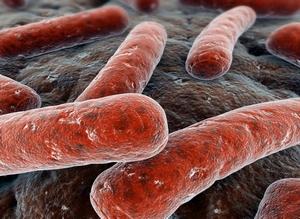 вид бактерии под микроскопом