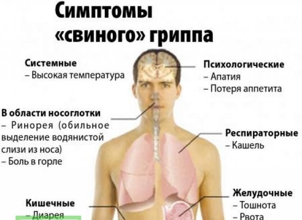 основные симптомы свиного гриппа