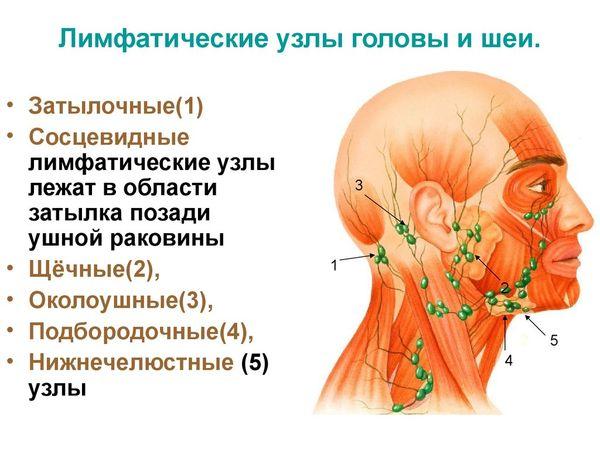 лимфоузлы шеи