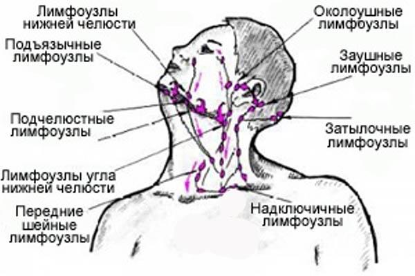 расположение лимфоузлов шеи