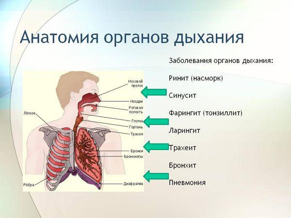 заболевания огранов дыхания